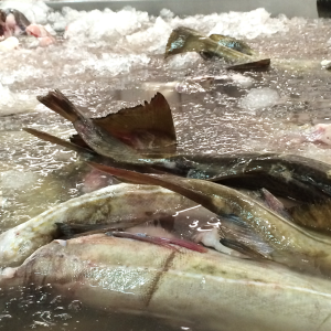 Melbu fish