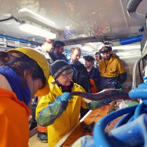 Vurdering av fisk om bord på tråleren Molnes.